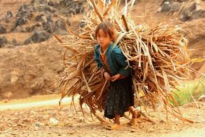 Cover image: Child labour