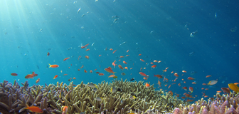 Cover image: World Oceans Day