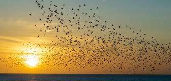 Cover image: World Migratory Bird Day