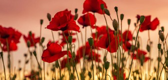 Cover image: Remembrance Day