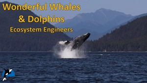 Cover image: Wonderful Whales and Dolphins: Ecosystem Engineers Part 2