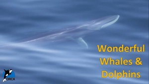 Cover image: Wonderful Whales and Dolphins: Incredible Journeys Part 1