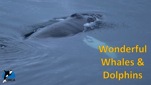 Cover image: Wonderful Whales and Dolphins: Incredible Journeys Part 2