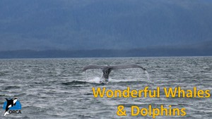 Cover image: Wonderful Whales and Dolphins: Incredible Journeys Part 3