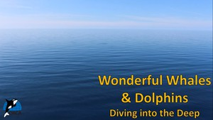 Cover image: Wonderful Whales and Dolphins: Diving into the Deep Part 1