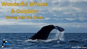 Cover image: Wonderful Whales and Dolphins: Diving into the Deep Part 2