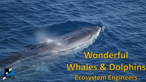 Cover image: Wonderful Whales and Dolphins: Ecosystem Engineers Part 1