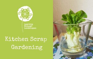 Cover image: Kitchen Scrap Gardening